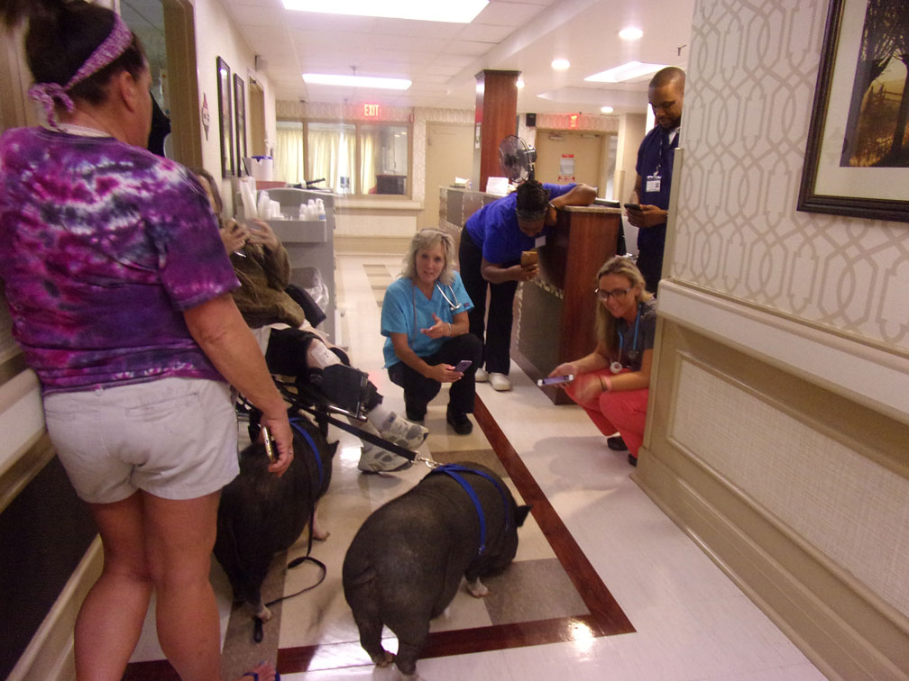 New-Eastwood-Pet-Therapy-10
